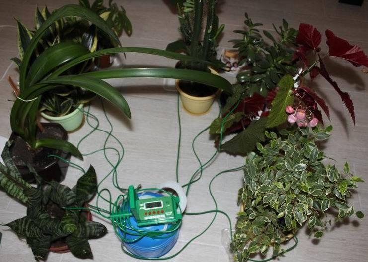 Автополив цветов дома