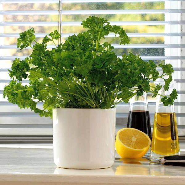 Полезные растения выращивание дома 99