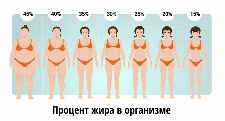 подкожный жир на животе у мужчин