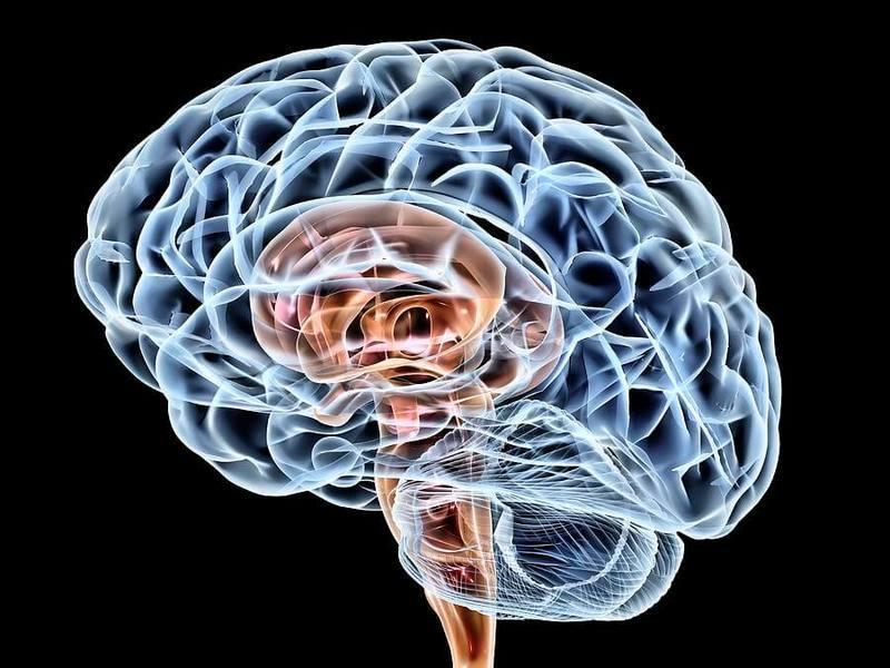 Путешествия улучшают работу мозга