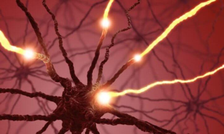 Мозг чистит память с помощью новых нервных клеток