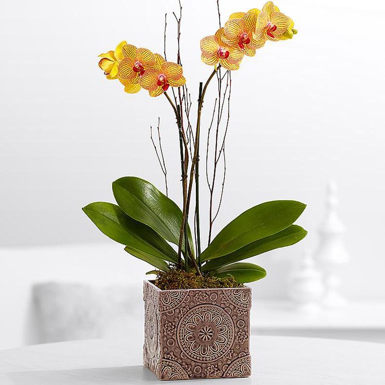 Если орхидея не цветет что делать