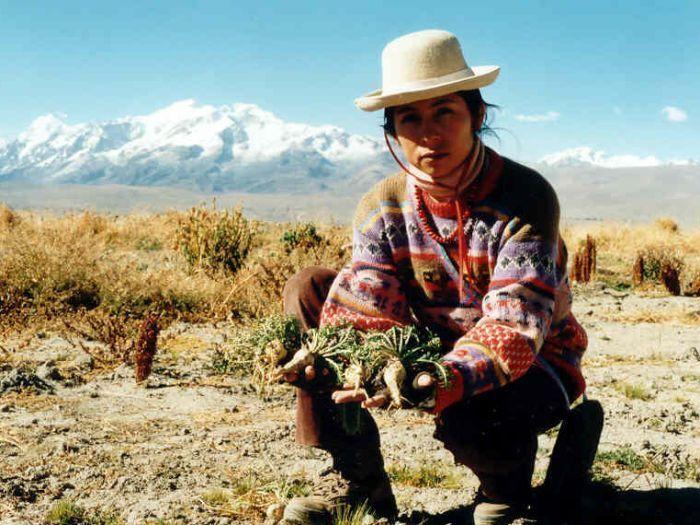 мака перуанская как принимать