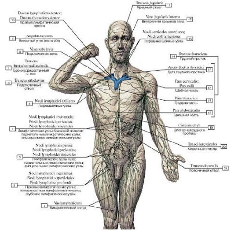 Сломана лимфа- значит мы будем плеваться через кожу
