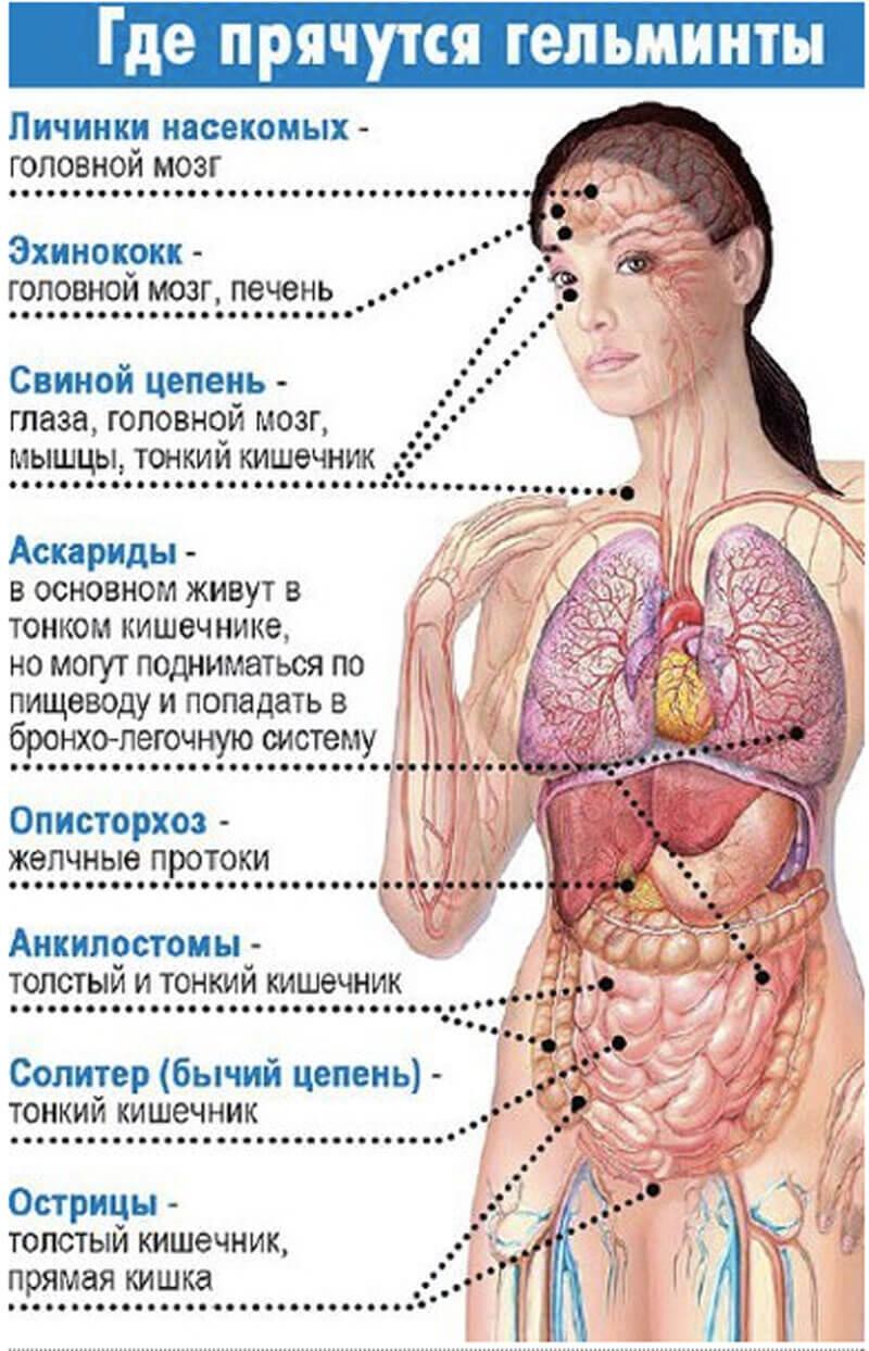 глисты и другие паразиты в организме человека