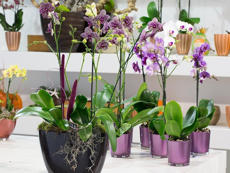 Секреты рассадки орхидей: Как одно растение превратить в 100!