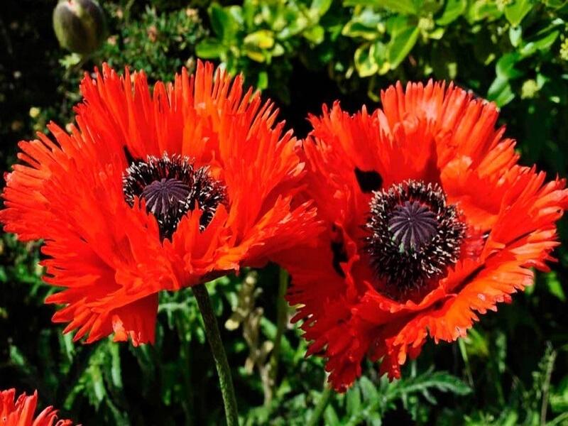 10 самых красивых растений для солнечной клумбы