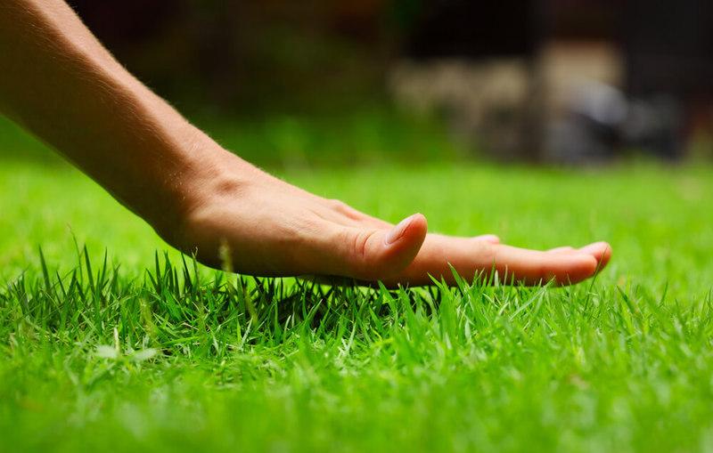 Болезни и вредители газона: как отстоять свою лужайку в неравном бою