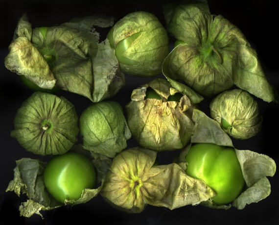 Физалис овощной и ягодный: сбор, хранение, рецепты