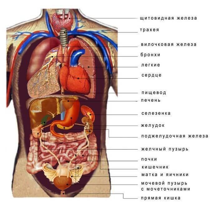 Химия тела ото рта до ануса