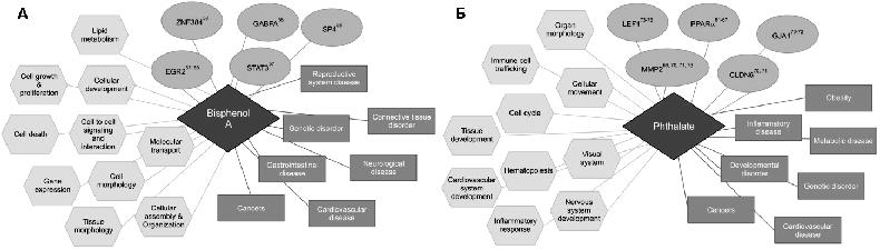 Что вы не знали об эпигенетике: гены и клеточная память