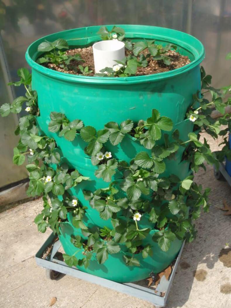 Оптимальная почва для клубники: какой она должна быть 51