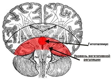 Нейрофизиология оргазма