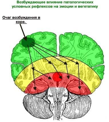 ВЕГЕТО-СОСУДИСТАЯ ДИСТОНИЯ с точки зрения нейрофизиологии