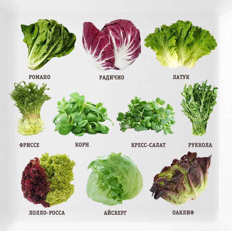 Все, что нужно знать о салате и листовой зелени