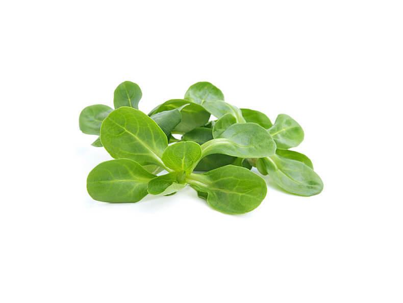 Самые популярные виды салатов и листовой зелени