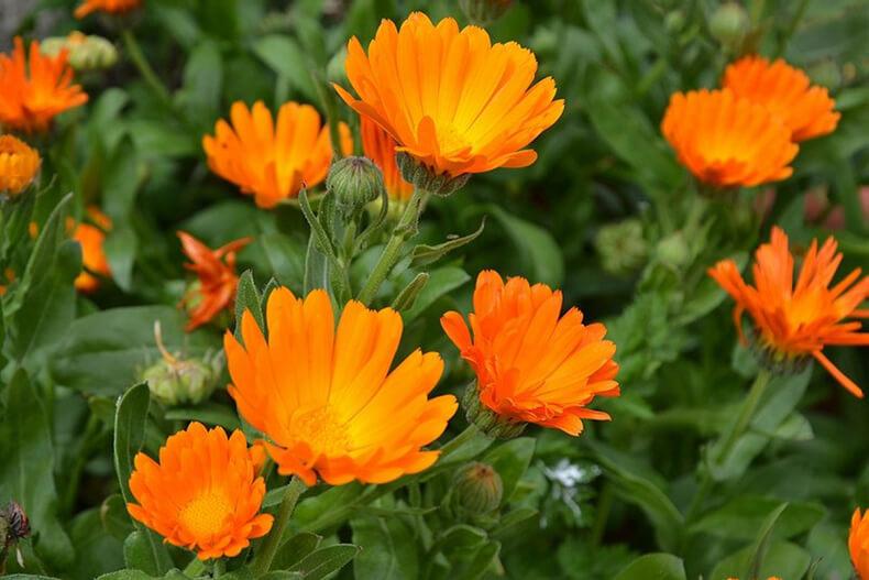Травы от псориаза внутренний прием лечение сборами и отварами