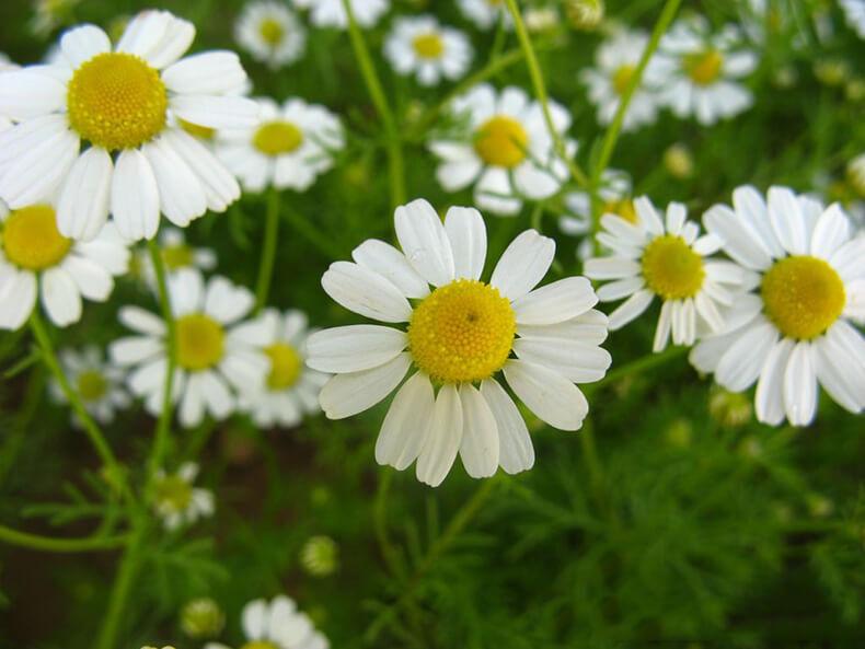 Лучшие травы для очищения кожи