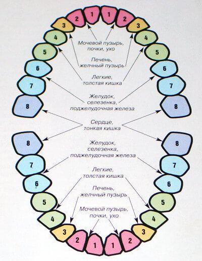 Райнхольд Фоль: Связь зубов с эндокринной системой и позвоночником