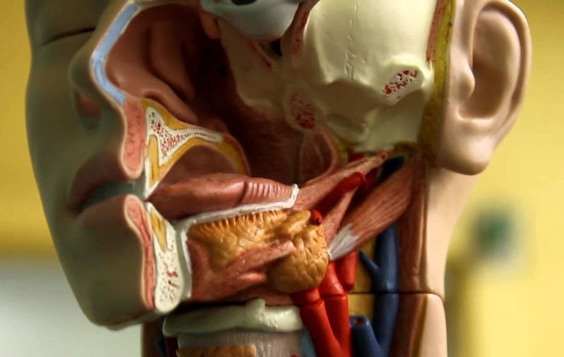 6 проблем в полости рта, за которыми скрываются другие заболевания