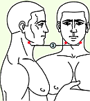 Третья зона массажа