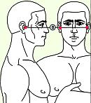 Восьмая зона массажа