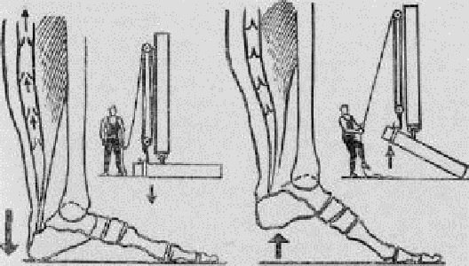 Секрет активного долголетия: Виброгимнастика академика Микулина