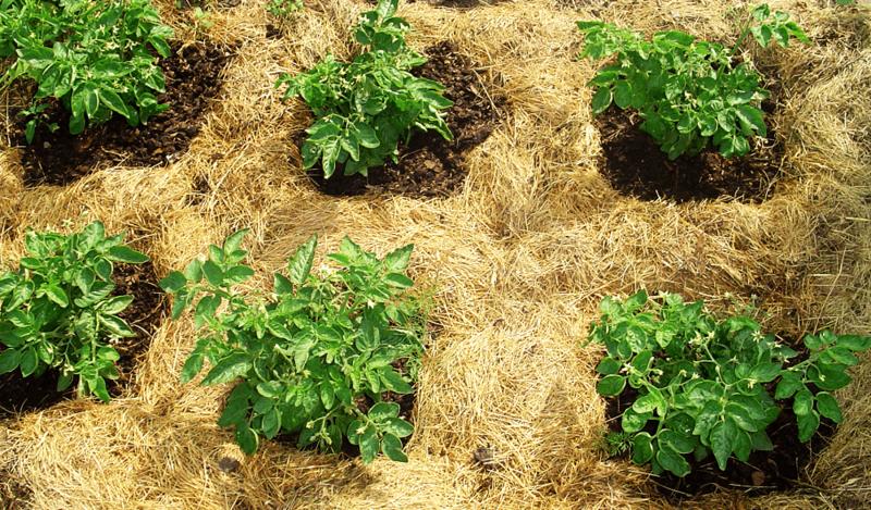 Как сделать мягкой землю в огороде