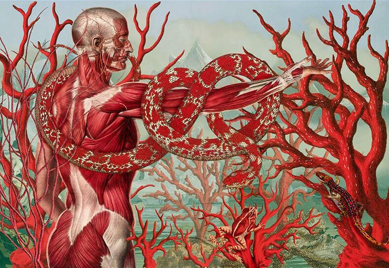 Метафоры здоровья: язык органов