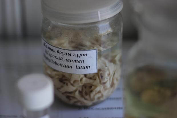 Вся правда о паразитах от врача-инфекциониста с 25-летним стажем