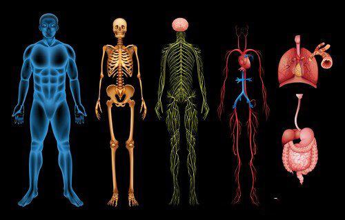 Наши органы – нас слышат. Поговори со своим телом