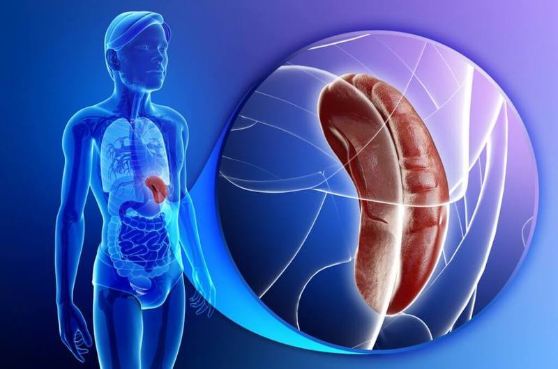 Канал желудка и поджелудочной железы thumbnail
