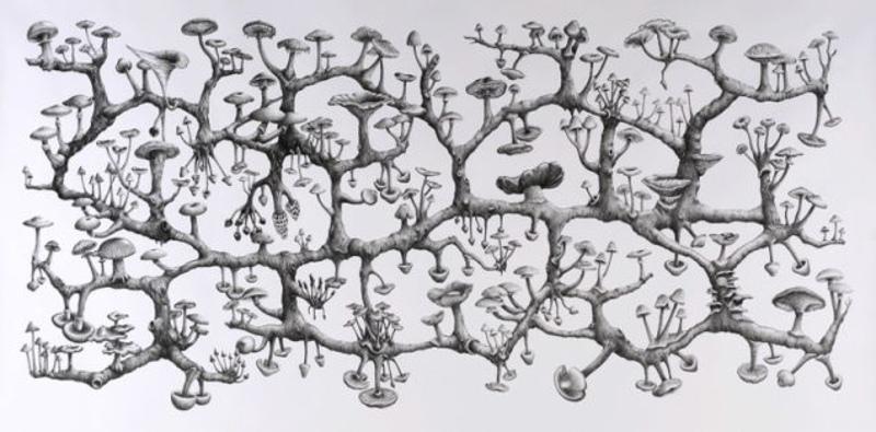 Для грибов эта власть над мозгом является средством размножения