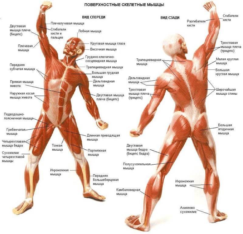 Что такое точки напряжения в мышцах и как их лечить