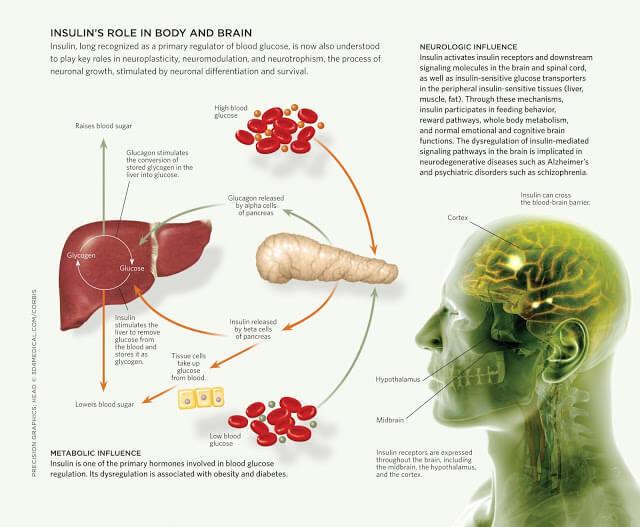 Инсулин: гормон здоровья и долголетия