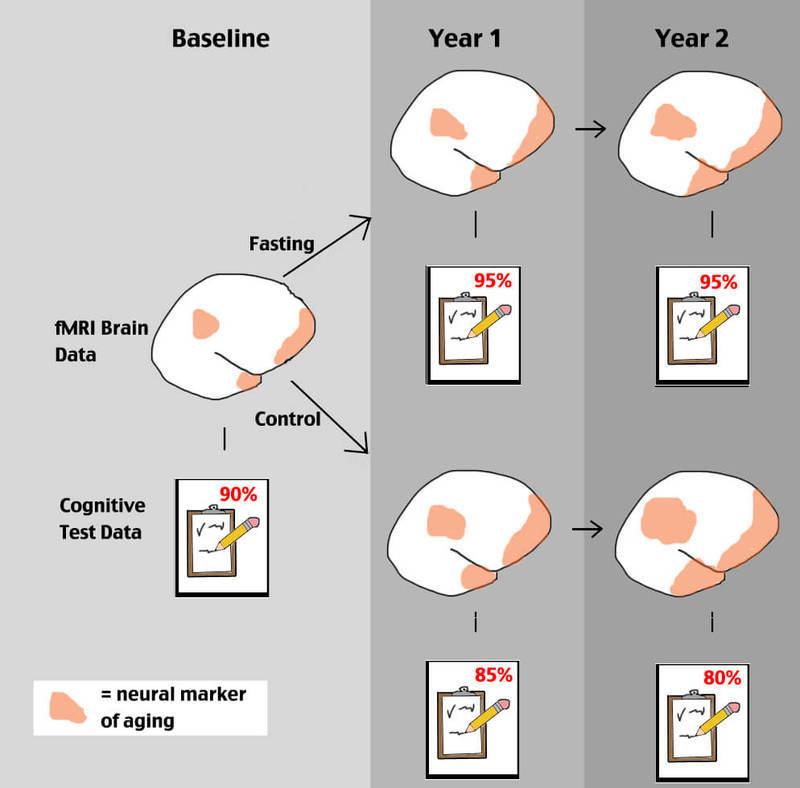Как периодическое голодание влияет на мозг