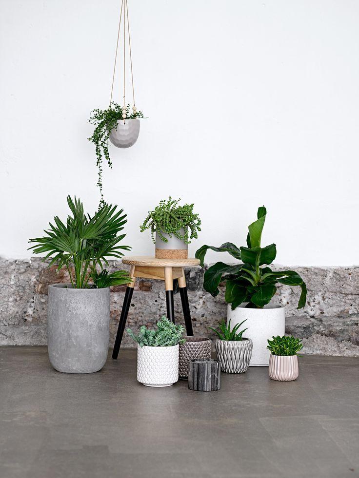 Узнайте для чего втыкать спички в горшки с растениями