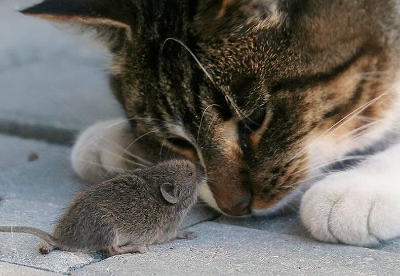 Почему кошки приносят хозяину убитых животных