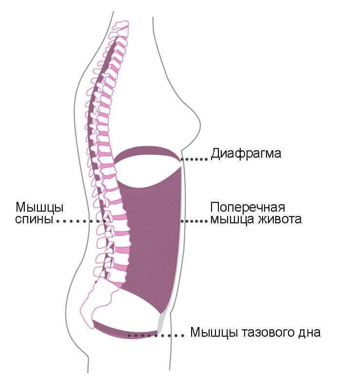 Болит поясница и висит живот? причина - поперечная мышца живота