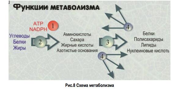 Роль гомеостаза