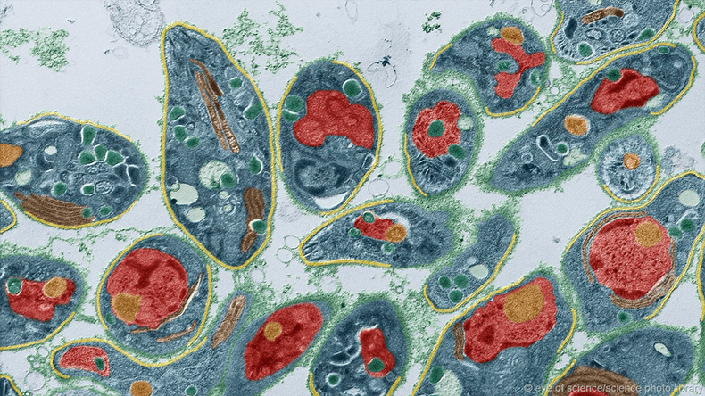 Вирусное заболевание - недостаток смысла жизни