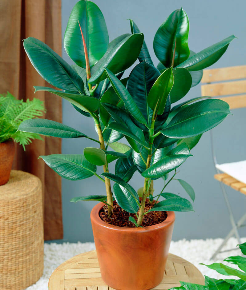 какие домашние растения очищают воздух