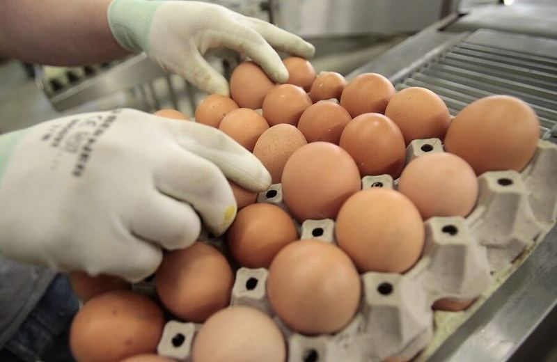 Обман в магазине: уловки со свежестью, размером и мытьем при продаже яиц