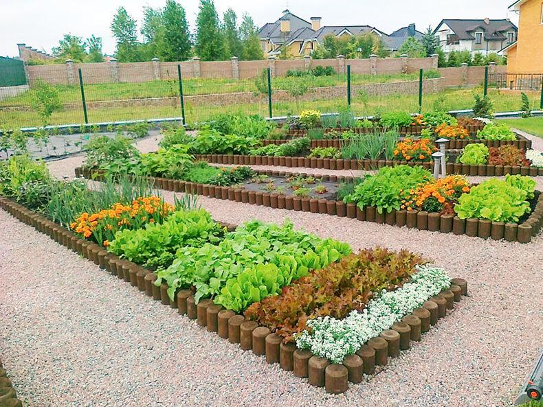 фото огород для ленивых