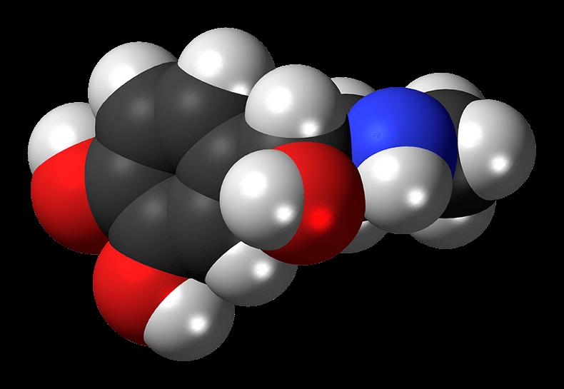 Нейротрансмиттеры: как гормоны управляют главными функциями нашего организма