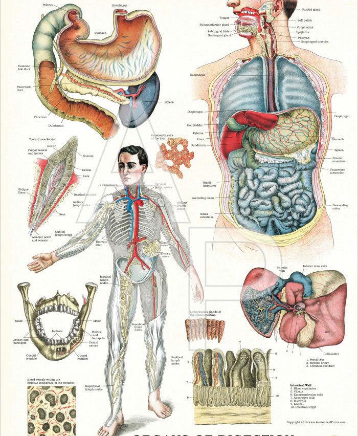 Восточная медицина: 6 стадий  развития болезни
