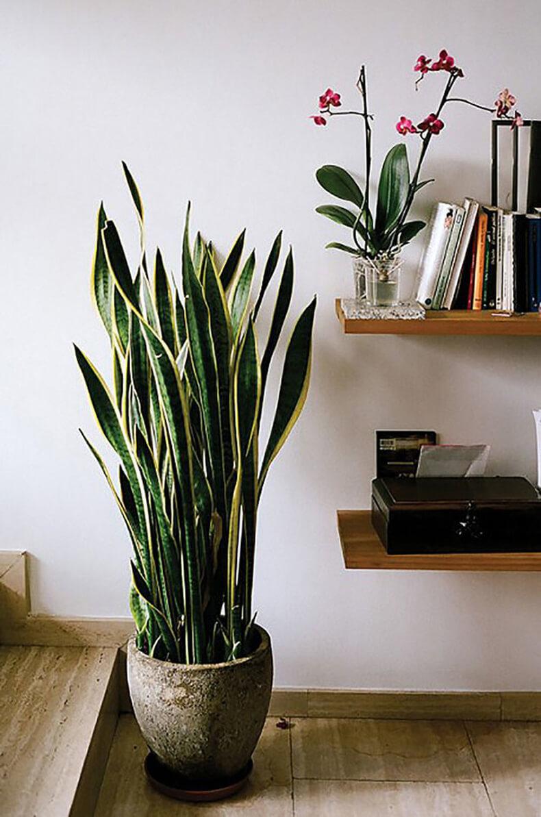 Цветы для южного окна: Комнатные растения для южных окон