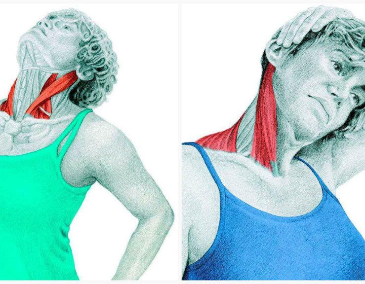 Спиральный твист шеи в восьми направлениях