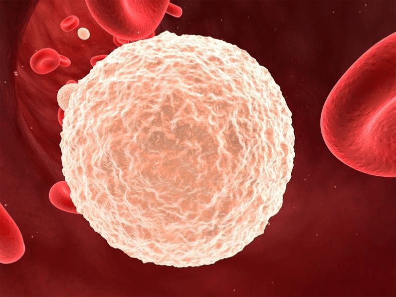 биохимия крови расшифровка онлайн бесплатно
