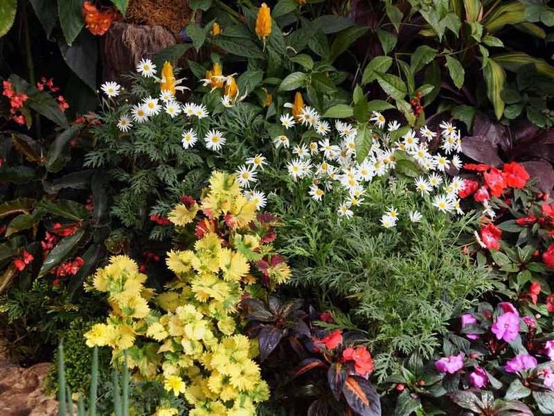 Какие цветы садить на рассаду в январе